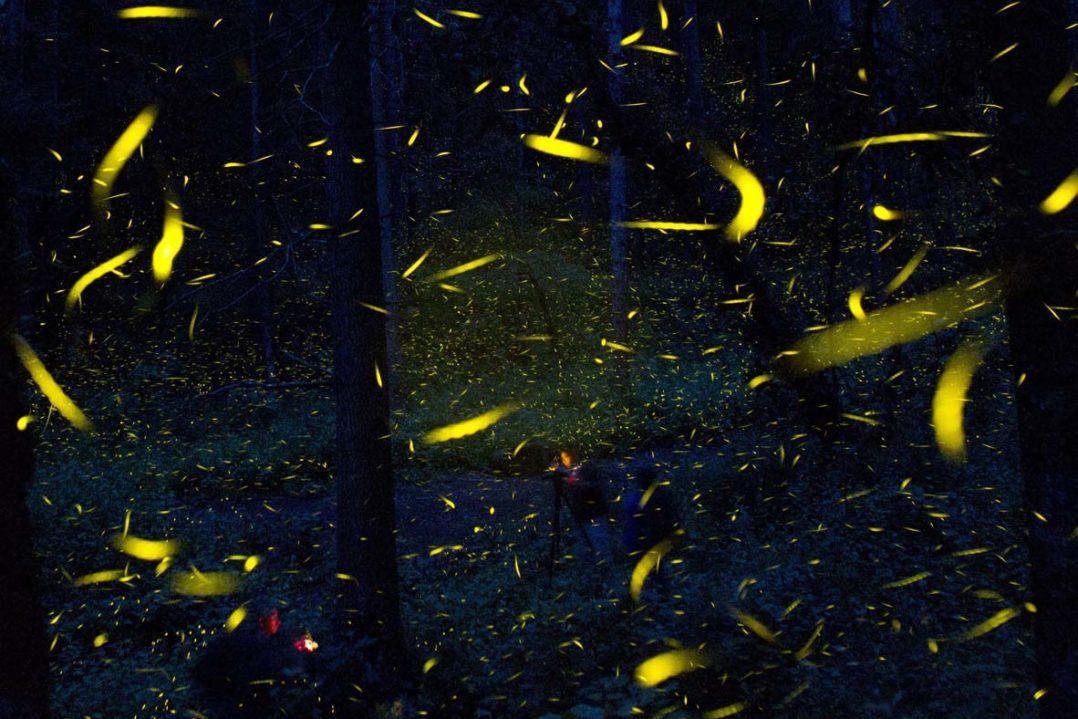 APTOPIX Mexico Firefly Sanctuary Photo Gallery